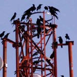 Government Agencies Battle Over Adverse Impact of Cell Tower Radiation on Wildlife