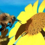 World's No. 1 Pesticide Brings Honeybees To Their Knees, Say Scientists