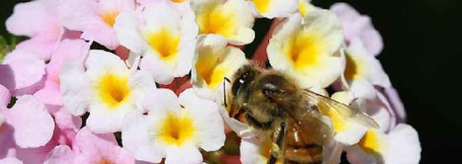 New Harvard Study Strengthens Link Between Neonicotinoids and Bee Colony Collapse