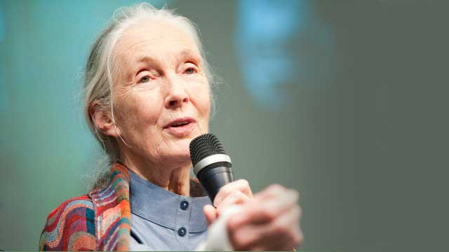 Chimpanzee expert and conservationist Jane Goodall. (Photo: Kristoffer Tripplaar / World Bank)