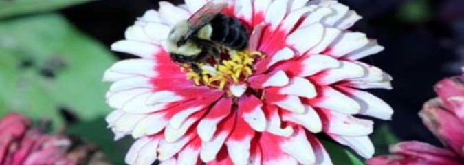 How Plants May Be Evolving To the Lack Of Bees