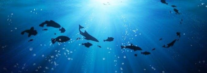 No Ocean, No Us: 3 Reasons We Should Care About the State of Our Oceans
