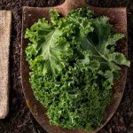 10 Superfoods That Are Healthier Than Kale