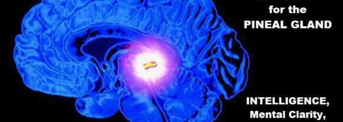 Top 5 Foods for the Pineal Gland