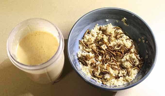 Breakfast: Mealworm Oatmeal and Cricket Smoothie