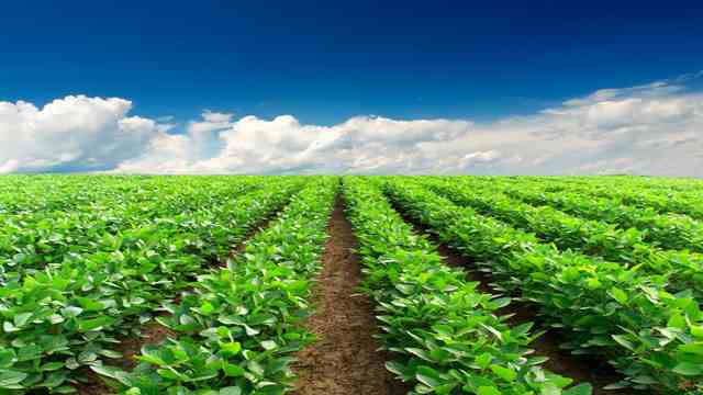 organic farming versus industrial farming essay The organic farming implies essay on the organic farming composting of farm wastes and industrial wastes raising green manures as inter crops and insitu.