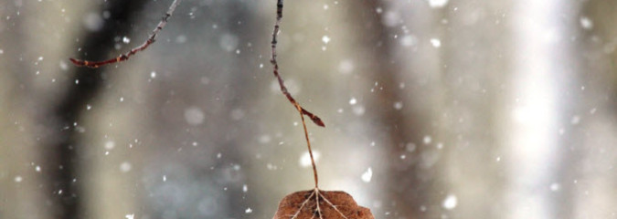 Standing Still Beneath Blowing Branches:  Lessons Learned from Trees
