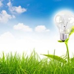 How the Dutch Are Generating 100% Sustainable Electricity From Plants