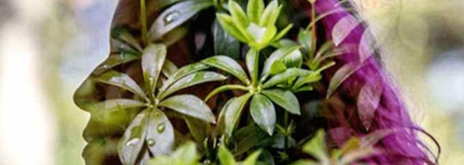 The Consciousness of Plants: How They Teach & Heal Us
