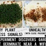 Cell Tower Radiation Prevents Garden Cress Seed Germination in Danish Experiment