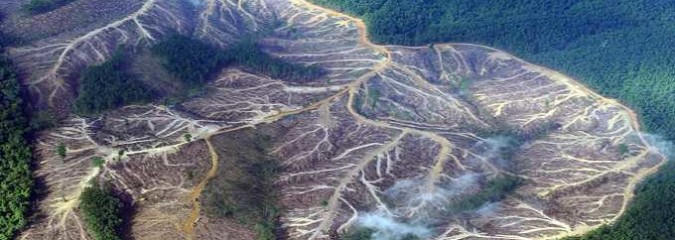 Here's What's Destroying the Rain Forest and What YOU Can Do About It