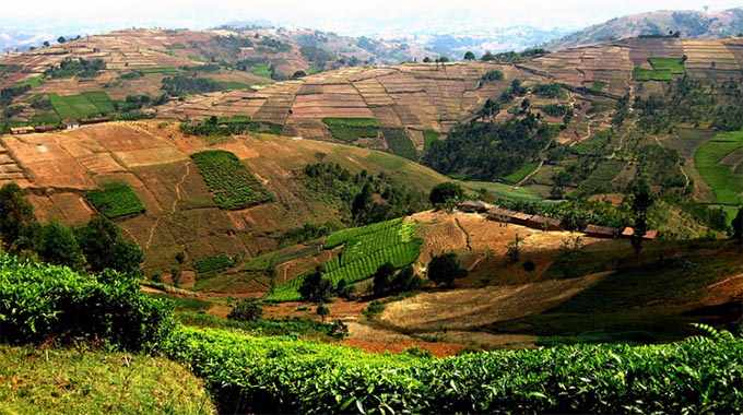 Agriculture on hills in the Burundian countryside. The green patches are tea. Until recently most of these hills were completely forested. Photo credit: Jane Boles / Flickr