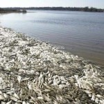 All Of A Sudden, Fish Are Dying By the MILLIONS All Over The Planet