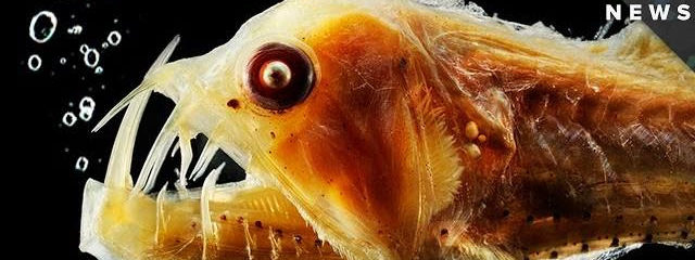 Here's Why Deep Sea Life Looks So Strange & How They Survive