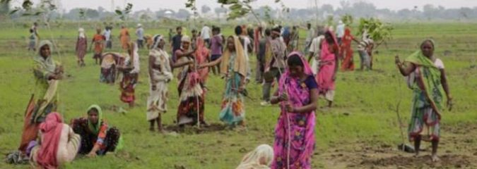 Indian State Plants 50 Million Trees In 24 Hours, Sets World Record