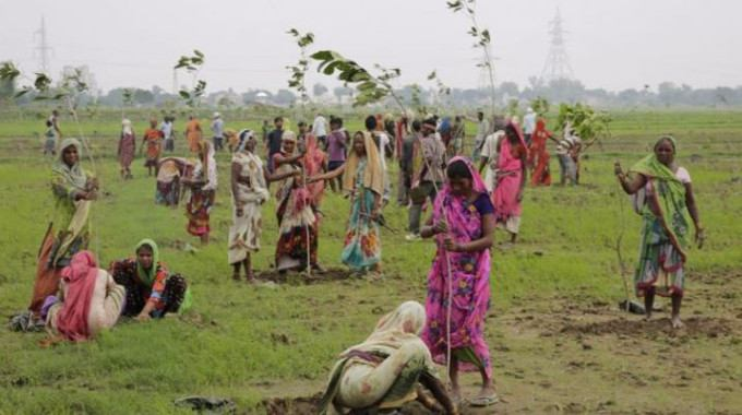 Indian women plant saplings on the outskirts of Allahabad, India, Monday, July 11, 2016. Hundreds of thousands of people in India's most populous state Uttar Pradesh jostled for space as they attempted to plant 50 million trees over  24 hours to set a world record. (AP Photo/Rajesh Kumar Singh