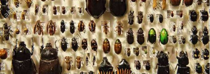 It's NOT Just Bees – All Insects Are In Decline and Heading for Extinction