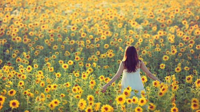 Young woman walking away in a field of sunflowers-compressed