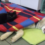 Amazing Photos: Angelic Cat Nurses Other Animals In Shelter (Even Dogs)!