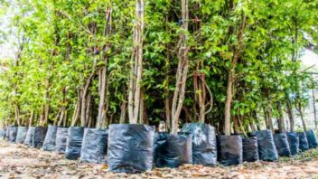 India Sets A New World Record For Planting The Most Trees In A Single Day