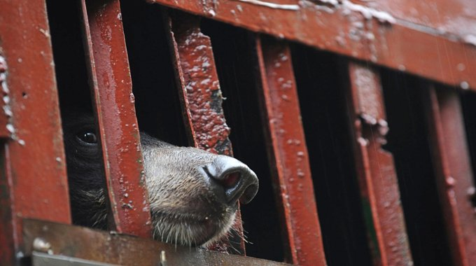 bear-in-captivity-compressed