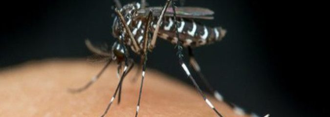 GMO Mosquito Trial Approved in the Florida Keys
