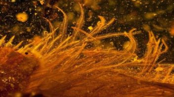 Feathered Tail of 99-MILLION-Year-Old Dinosaur Found in Amber (First of Its Kind!)