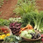 Global Hunger: Pesticide Pollution Is Not A Solution