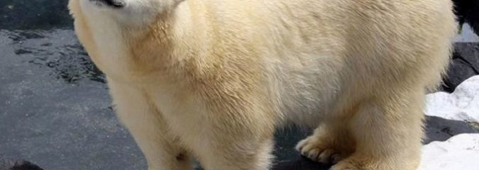 "Polar Bear Dies of a ""Broken Heart"" After SeaWorld Ships Off Her Best Friend of 20 Years"