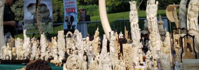 NYC Crushes $8 Million in Confiscated Ivory in Central Park to Show Ivory Ban is Here to Stay