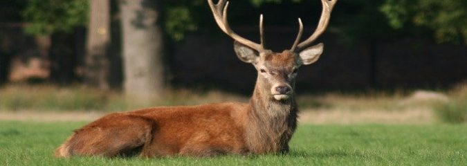 5 Ways Deer Antler Spray Can Build Your Strength and Endurance