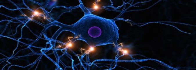 The Importance of the Vagus Nerve in Health and Well-Being