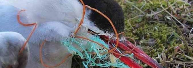 'Plastic in All Sizes' Found Everywhere in Once Pristine European Arctic